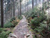 Zielony szlak wzdłuż rzeki Kamiennej w Szklarskiej Porębie